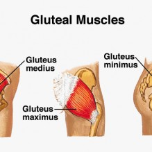 glutealmuscles